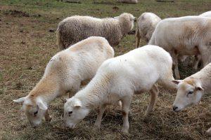 Shepherding 101 – Teach One Reach One